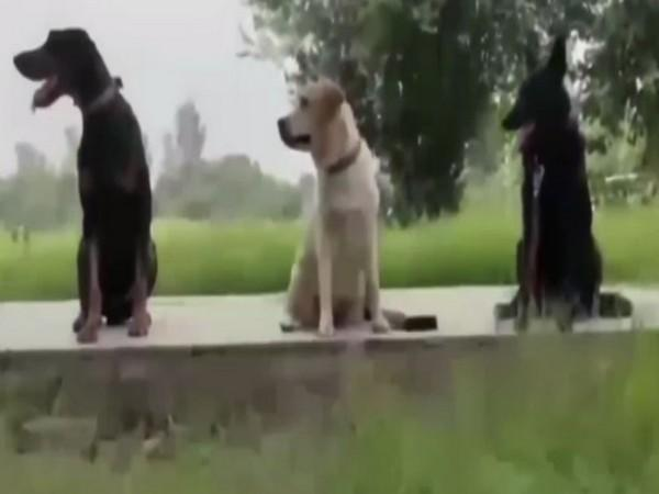 Visual of ITBP dogs in Kabul (Photo/ANI)