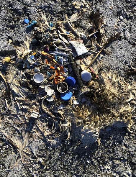 In this Oct. 15, 2019, photo, plastic sits in the decomposed carcass of a seabird on Midway Atoll in the Northwestern Hawaiian Islands. The deaths are a visceral sign of the impact plastics have on the environment. In the Pacific and other oceans around the world, circulating currents pull together vast areas of plastic that seabirds and marine wildlife either eat or get entangled in. (AP Photo/Caleb Jones)