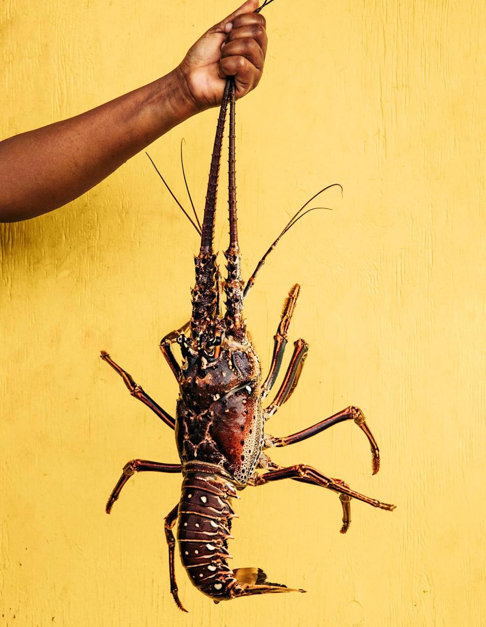 """<p>Food shopping on Bequia calls for a visit to the day-boat fishermen who dock at the islands capital Port Elizabeth, and sell the day's catch, including spiny lobster, <a href=""""https://www.marthastewart.com/343354/fresh-tuna-recipes"""" rel=""""nofollow noopener"""" target=""""_blank"""" data-ylk=""""slk:tuna"""" class=""""link rapid-noclick-resp"""">tuna</a>, and mahi-mahi.</p>"""