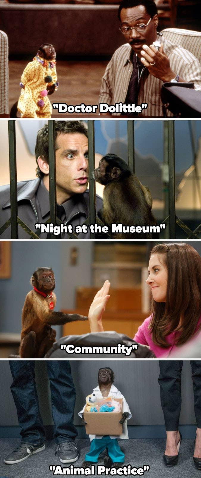"""Crystal the Monkey in """"Doctor Dolittle,"""" """"Night at the Museum,"""" """"Community,"""" and """"Animal Practice"""""""