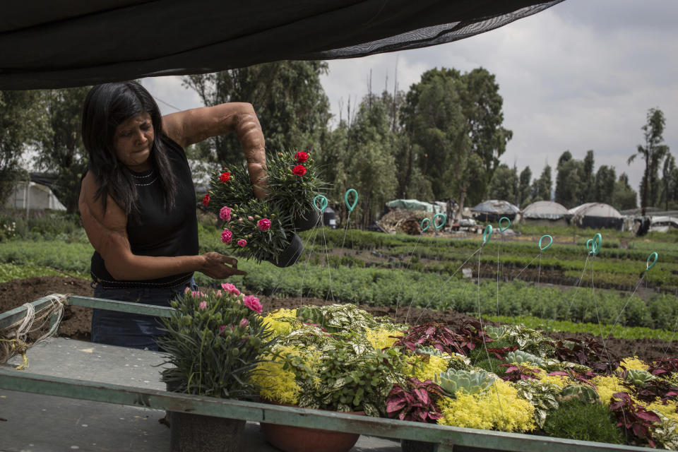 Elisa Xolalpa, who survived an acid attack while tied to a post by her ex-partner 20 years ago when she was 18, loads plants into a wheelbarrow at her greenhouse where she grows flowers to sell at a market in Mexico City, Saturday, June 12, 2021. Xolalpa is focused on preparing herself mentally for a new court hearing for her attacker, who was finally arrested in February 2021. (AP Photo/Ginnette Riquelme)