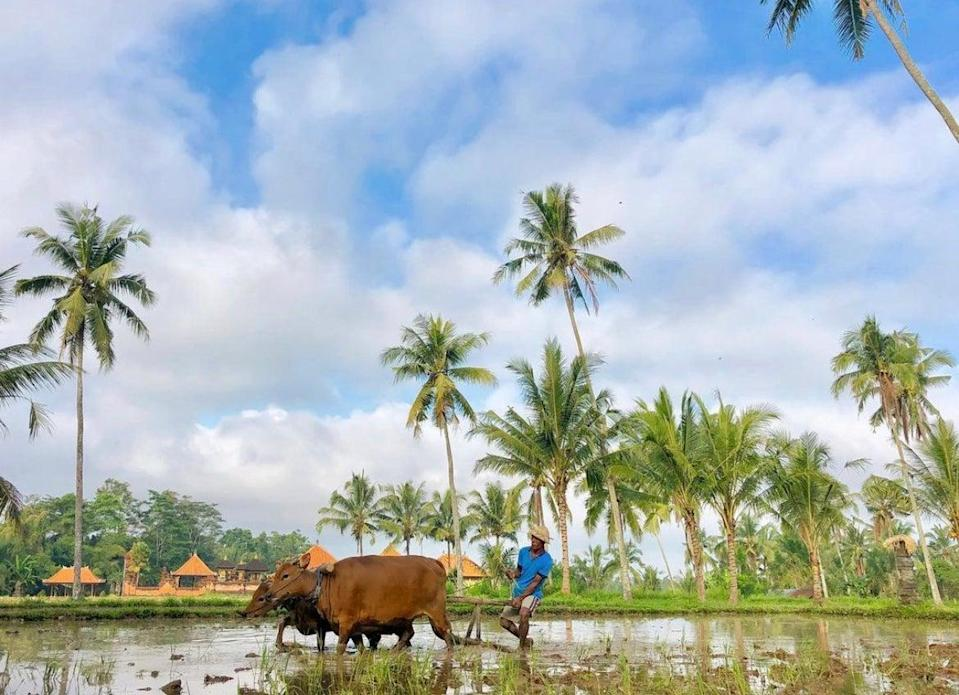 Indonesia is eyeing a long-term visa for international visitors and digital nomads for up to five yearsStephanie Conway
