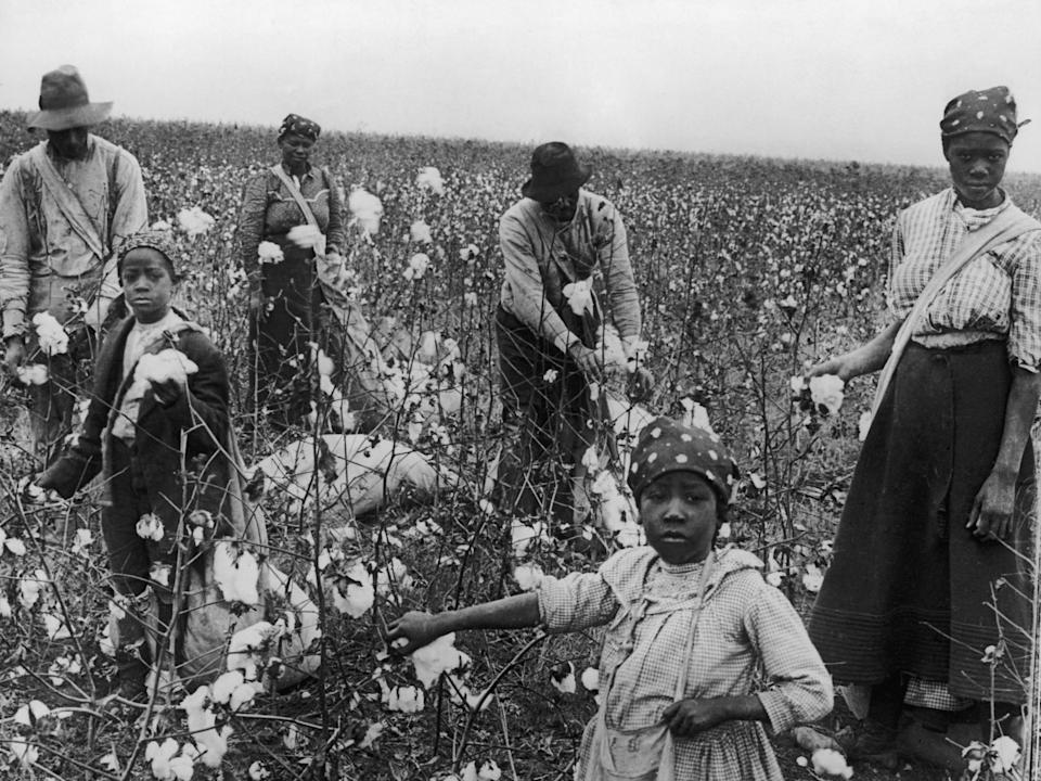 Women and men pick cotton in Texas.
