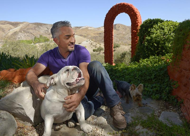 "In this Oct. 18, 2012 photo, Cesar Millan poses with his English Bull Dog George, left, and an unidentified dog at his Dog Psychology Center, in Santa Clarita, Calif. Millan's seventh book, ""A Short Guide to a Happy Dog"" is due out Jan. 1, 2013. On Jan. 5, Nat Geo Wild will premiere ""Leader of the Pack,"" a new series with a goal to increase pet rescue, rehabilitation and rehoming around the world. (AP Photo/Mark J. Terrill)"