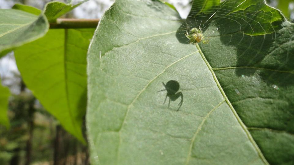 Spiders are one of the most misunderstood <span>creatures</span> on earth. (Photo: Getty Images)