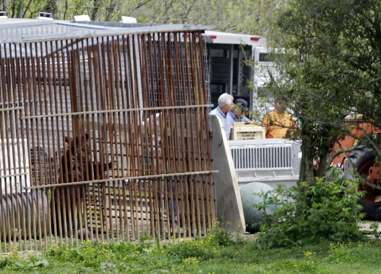 A bear explores its cage on the farm of Marian Thompson near Zanesville, Ohio after it and four other exotics were released to Thompson by the Columbus Zoo Friday, May 4, 2012. The Columbus Zoo returned five exotic animals to Thompson, the survivors of 56 animals her late Terry Thompson, released from the eastern Ohio farm Oct. 18, 2011, before he committed suicide. Fearing for the public's safety, authorities killed 48 of the animals. (AP Photo/Mark Duncan)