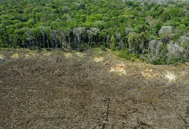 Humanity cannot afford the continuing destruction of the planet's tropical forests, which absorb and store vast quantities of CO2 (AFP/Florian PLAUCHEUR)