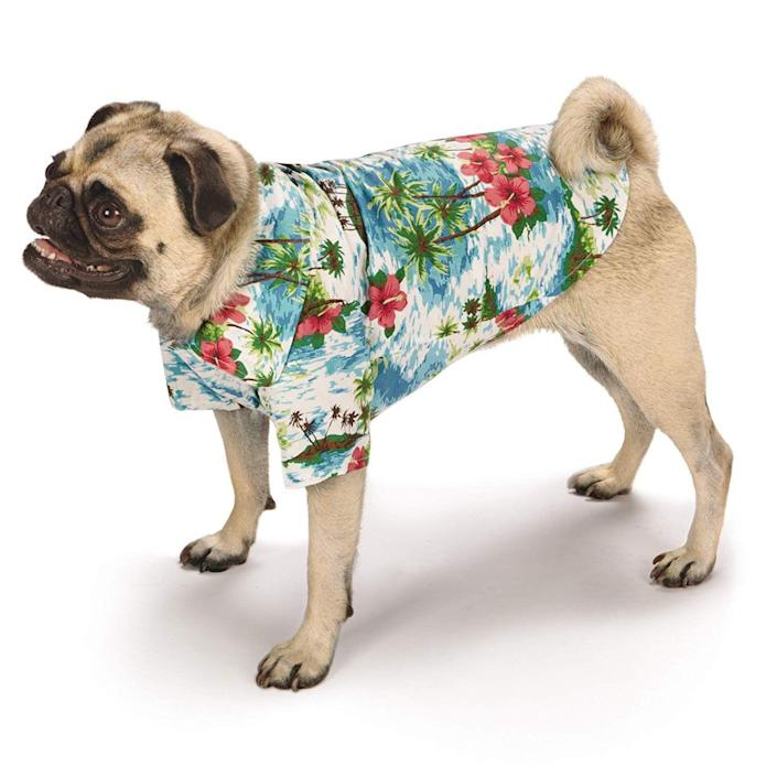 "<p>For pups who prefer to hang loose during Halloween.</p> <br> <br> <strong>Casual Canine</strong> Hawaiian Breeze Camp Shirt Dog, $17.99, available at <a href=""https://www.amazon.com/Casual-Canine-Hawaiian-Breeze-24/dp/B00H28XGY0"" rel=""nofollow noopener"" target=""_blank"" data-ylk=""slk:Amazon"" class=""link rapid-noclick-resp"">Amazon</a>"