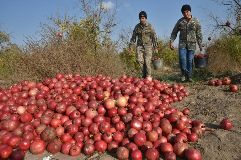A short distance from the pomegranate field, Azerbaijani and Armenian soldiers stand guard