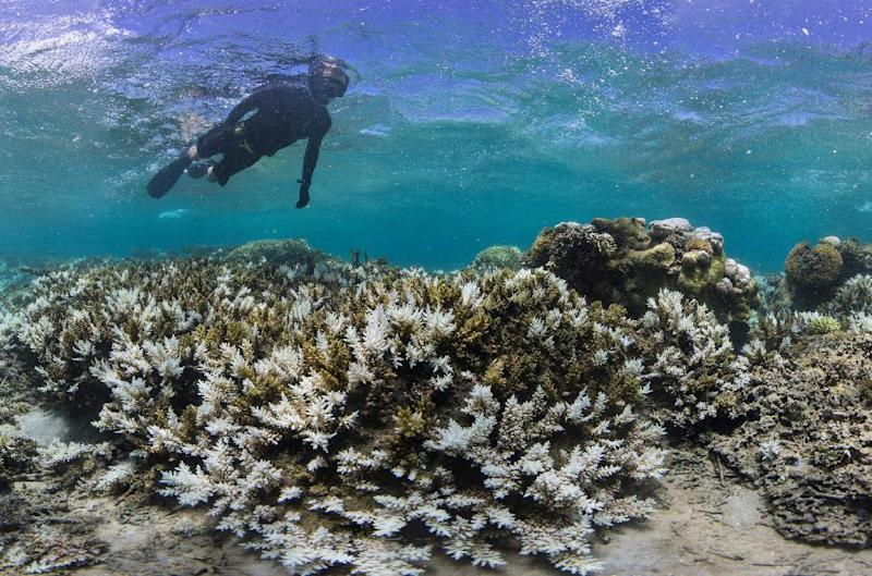 Mass coral bleaching at Great Barrier Reef