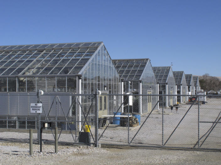 FILE - A series of greenhouses are pictured at the University of Nevada, Reno, where a rare desert wildflower is growing in this photo taken on Feb. 10, 2020, in Reno, Nevada. The Biden administration says a U.S. judge exceeded his authority when he ordered the Fish and Wildlife Service to decide by May 21, 2021, whether to formally propose endangered species protection and designate critical habitat for a rare desert wildflower at the center of a fight over a proposed lithium mine in Nevada. (AP Photo/Scott Sonner, File)