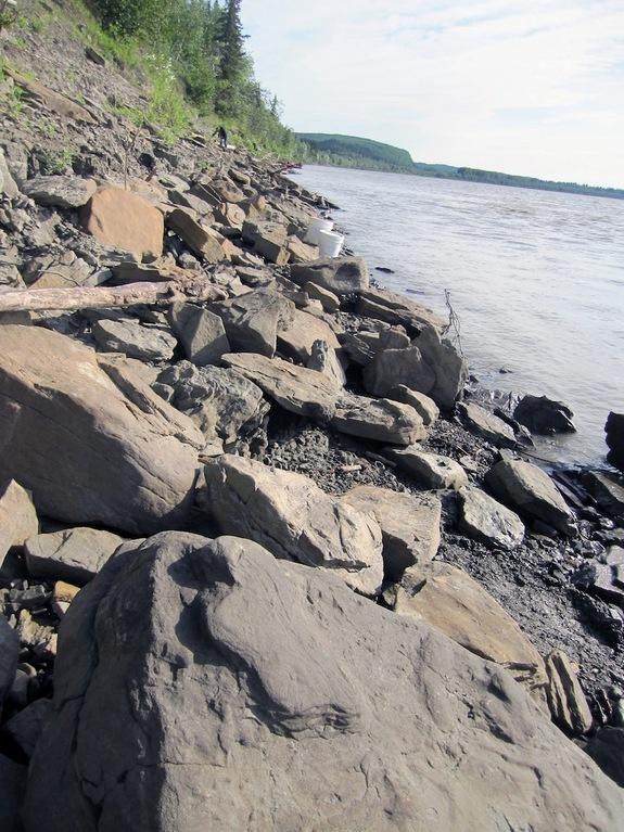 Thousands of Dino Tracks Found Along Alaska's Yukon River
