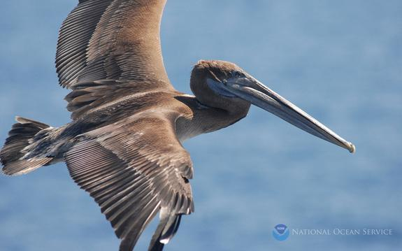 Seabirds Carry Warnings of Ocean Pollution