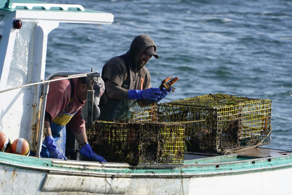 A sternman, right, checks a lobster while fishing, Monday, Sept. 21, 2020, off South Portland, Maine. The state's lobster industry is in the midst of a multiyear boom, and fishermen have caught more than 100 million pounds of the crustaceans for a record nine years in a row.(AP Photo/Robert F. Bukaty)