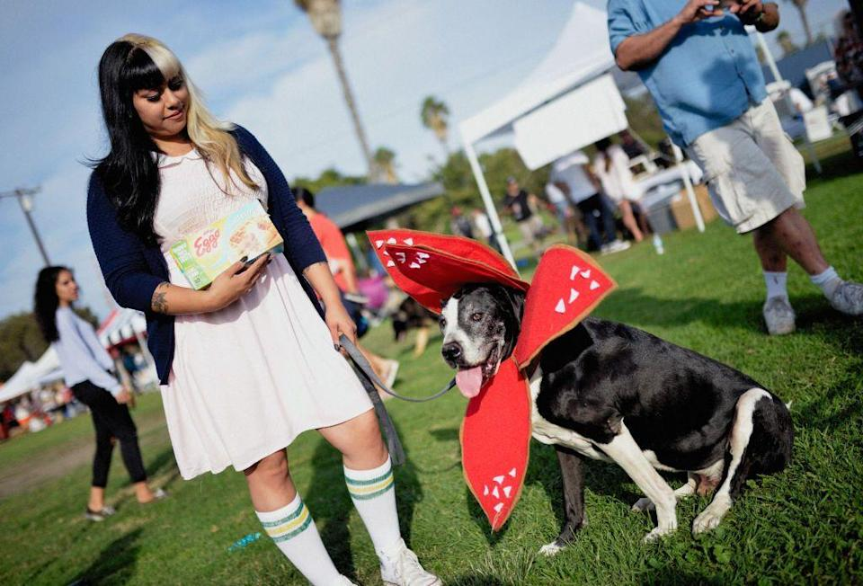 <p>Pair a season one Eleven costume (don't forget the Eggo waffles!) with a dog dressed as a demogorgon for a home run Halloween idea. Simply make the demogorgon costume out of felt and attach to your dog's collar.</p>