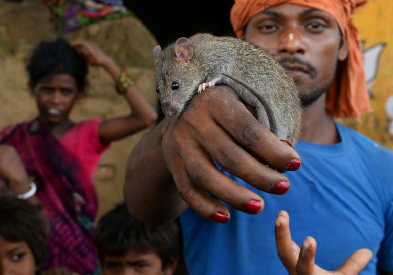 There are about 2.5 million Musahars -- 'Rat Eaters' -- making up one of India's most marginalised communities