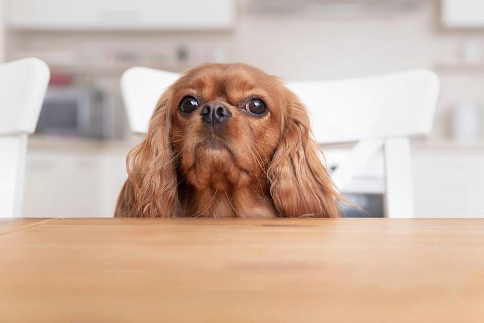 "<p>King Charles Cavs do well at acclimating to new situations and locations, according to Ellis, which means they'll easily adapt to your family and feel at home in no time. <a href=""https://spanielking.com/cavalier-king-charles-spaniel-exercise/"" rel=""nofollow noopener"" target=""_blank"" data-ylk=""slk:These dogs do require some exercise"" class=""link rapid-noclick-resp"">These dogs do require some exercise</a>, but they're also known for being sweet and snuggly.</p>"