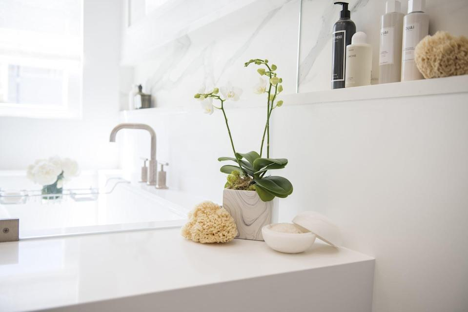 <p>Orchids have a reputation for being tricky to take care of, but that's only because people tend to overwater them. Like other warm-weather plants, they don't need a ton of water, but they need their watering to be regular. Adding an ice cube to your orchid once a week will ensure it gets the right amount of water on a regular schedule, and the slow release of the ice will prevent it from getting root rot. </p>