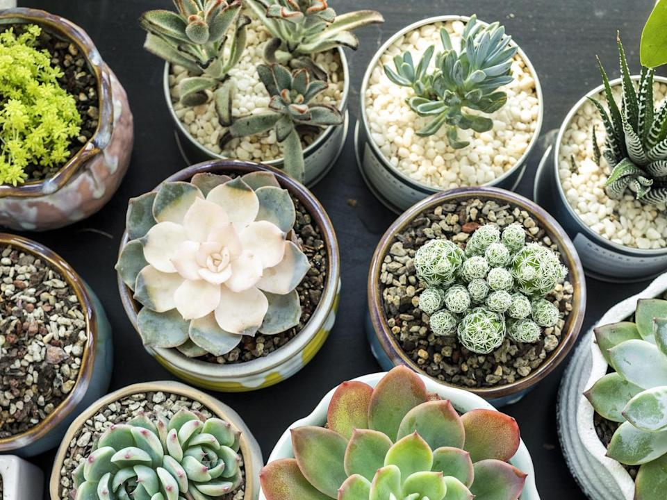 Regularly rotate your succulents