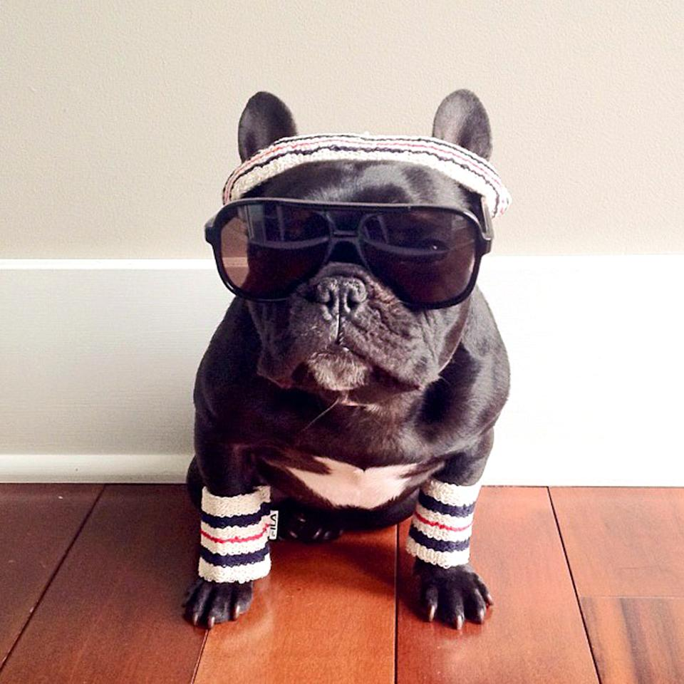 PIC BY SONYA YU / CATERS NEWS - (PICTURED: Trotter dressed as Richie Tenenbaum from her favourite film The Royal Tenenbaums) - An adorable little French Bulldog has been playing dress-up and has impressively gathered a following of 30,000 on Instagram. The photogenic hipster, called Trotter, wears a range of outfits from a beret, moustache, top hat and pipe to high heels. Owner and Trotters photographer Sonya Yu said her little pup is simply a natural in front of the camera. SEE CATERS COPY