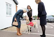 <p>The Duchess of Cornwall greets Storm, a half-Labrador half-Golden Retriever who's been trained to detect illnesses in humans. He also enjoys chin scratches.</p>