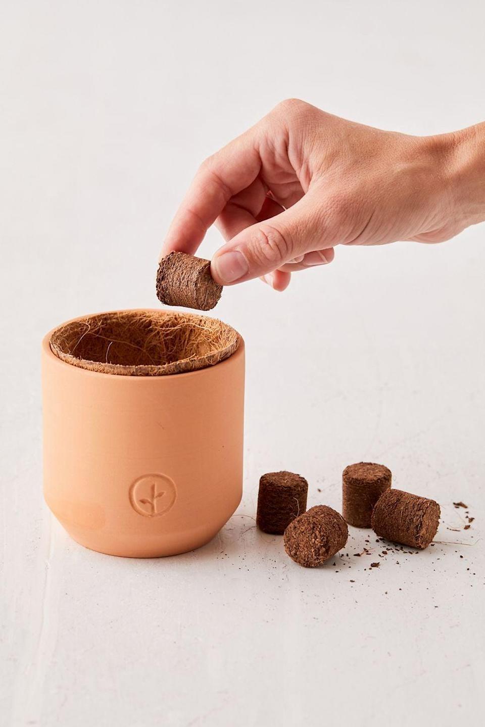 <p>If they have a green thumb, they'll appreciate the <span>Modern Sprout Holiday Tiny Terracotta Grow Kit</span> ($16). It comes with a cute pot, and they can watch their plant grow.</p>