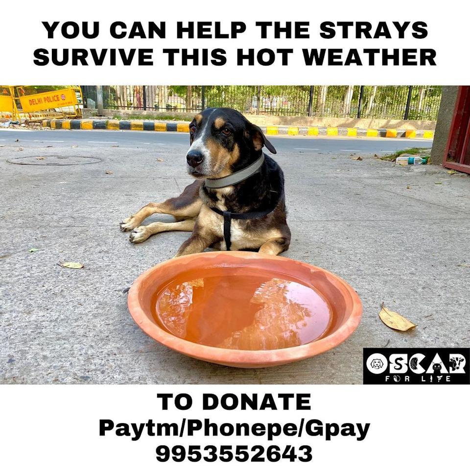 Oscar Water Bowl Project by Vibha to help strays get access to water