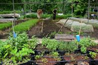 Farming gardens have been created in unusual places, including a former prison