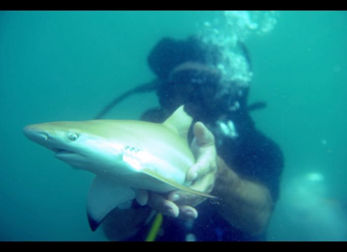 In this picture taken on September 3, 2011, an environmental activist releases a baby black-tip shark into the sea as part of an operation organised by the sharks protection group Dive Tribe off the coast of the southern Thai sea resort of Pattaya. On average an estimated 22,000 tonnes of sharks are caught annually off Thailand for their fins -- a delicacy in Chinese cuisine once enjoyed only by the rich, but now increasingly popular with the wealthier middle class. (CHRISTOPHE ARCHAMBAULT/AFP/Getty Images)