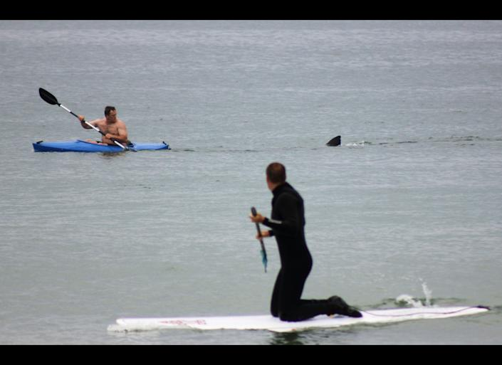Walter Szulc Jr., in kayak at left, looks back at the dorsal fin of an approaching shark at Nauset Beach in Orleans, Mass. in Cape Cod on Saturday, July 7, 2012. An unidentified man in the foreground looks towards them. No injuries were reported. The previous week, a 12- to 15-foot great white shark was seen off Chatham in the first confirmed shark sighting of the season according to a state researcher. Two more sightings were reported Tuesday, July 2, 2012. The same waters are filled with seals, which draw the sharks because they are a favorite food of the animal. (AP Photo/Shelly Negrotti)