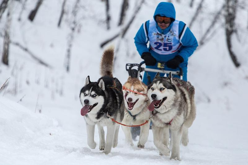 A sled dog race in Russia in January 2018. (Dmitry Feoktistov via Getty Images)
