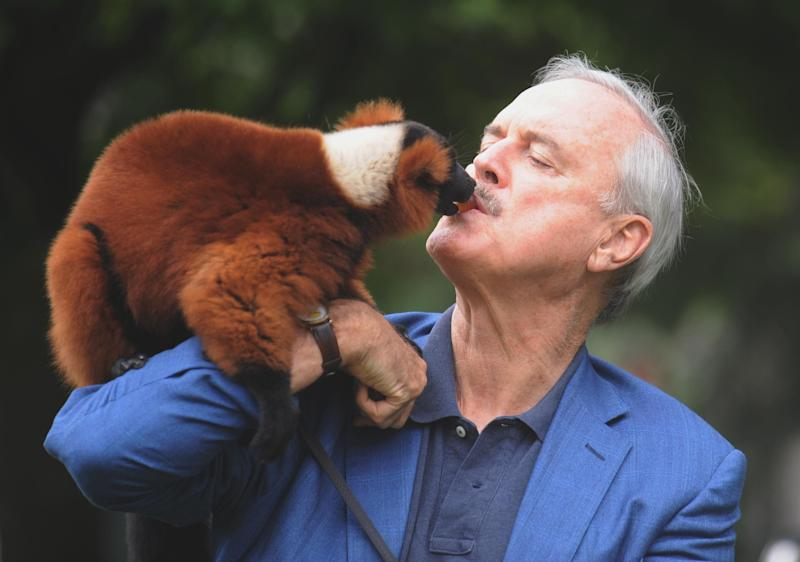 Monty Python star John Cleese feeds grapes to Colin the red ruffed lemur, during a visit to Bristol Zoo Gardens.