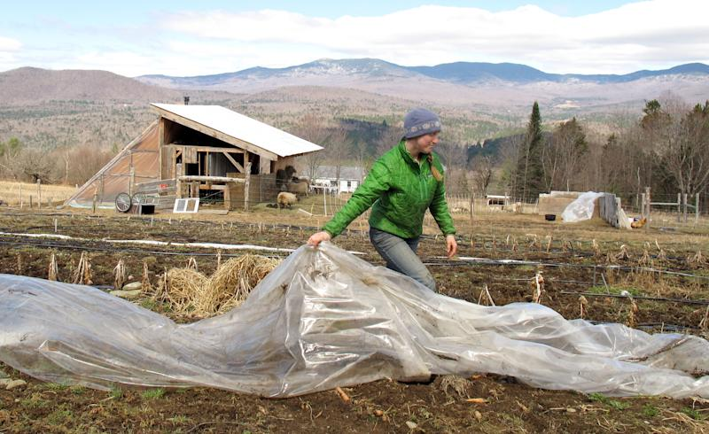 Katie Spring rolls up plastic that was used to cover certain plants during the winter in a field at the Good Heart Farmstead, Thursday, April 24, 2014, in Worcester, Vt. Spring and her husband Edge Fuentes, who both own the farm, back the GMO labeling bill passed by the Vermont Legislature. They believe people need to be able to know what's in their food. (AP Photo/Wilson Ring)