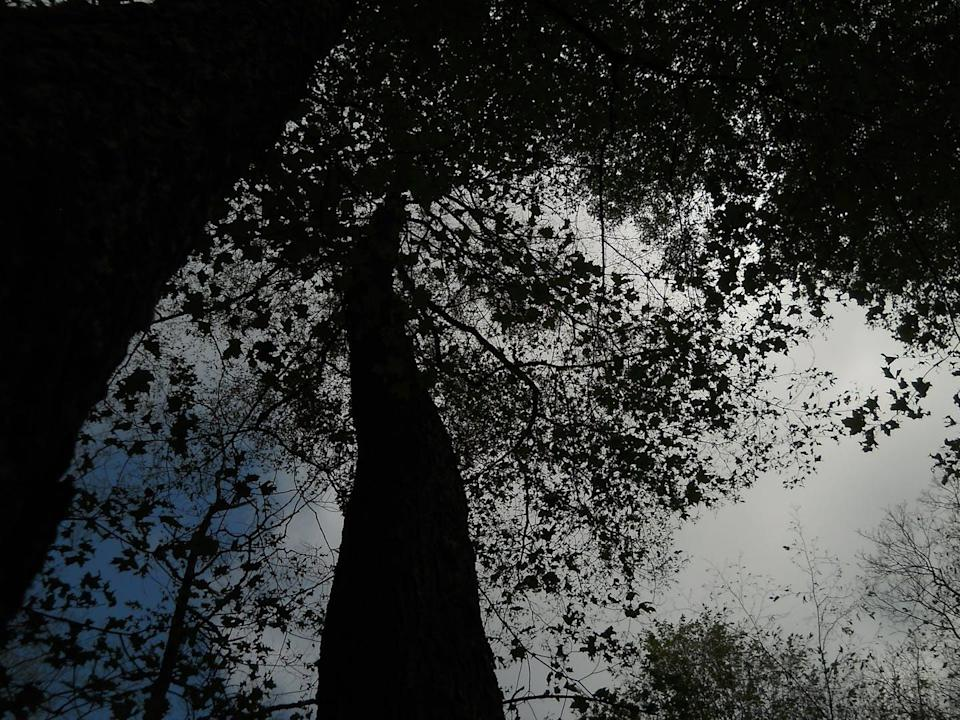 Backlit view of the tree canopy, missing most of the leaves.