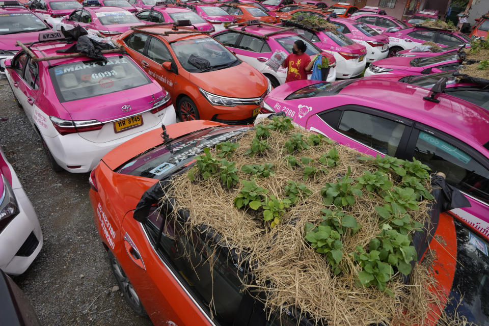"""Workers from two taxi cooperatives assemble miniature gardens on the rooftops of unused taxis parked in Bangkok, Thailand, Thursday, Sept. 16, 2021. Taxi fleets in Thailand are giving new meaning to the term """"rooftop garden,"""" as they utilize the roofs of cabs idled by the coronavirus crisis to serve as small vegetable plots and raise awareness about the plight of out of work drivers. (AP Photo/Sakchai Lalit)"""