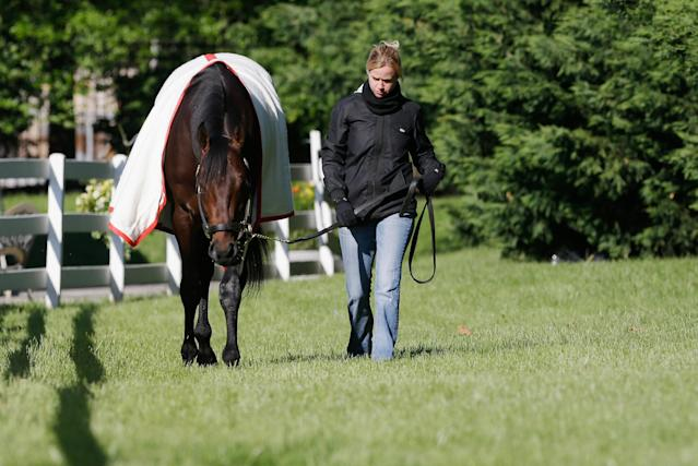 BALTIMORE, MD - MAY 14: Jennifer Patterson walks Kentucky Derby winner Orb outside the stakes barn as they prepare for the 138th Preakness Stakes at Pimlico Race Course on May 14, 2013 in Baltimore, Maryland. (Photo by Rob Carr/Getty Images)