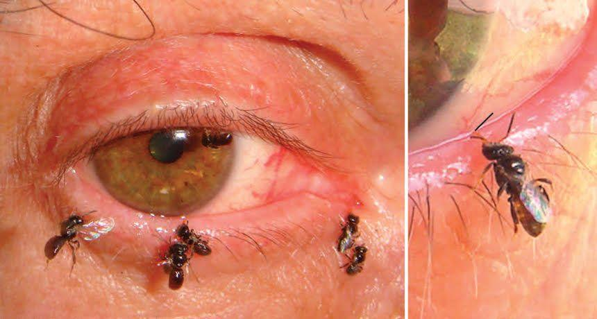 The photo widely circulated with the sweat bees story was actually from a 2009 study.