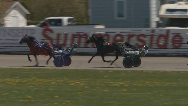 Horses pace by the Summerside sign at Red Shores.  The racetrack will mark 135 years of racing this year.  (Laura Meader/CBC - image credit)