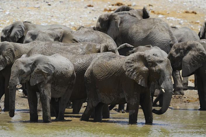 A herd of elephants move toward the Aus water hole to cool off from the hot midday sun, as temperatures reach 100 degrees. (Photo: Gordon Donovan/Yahoo News)