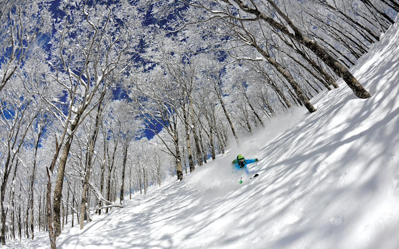 Floating through the white-fluffed boughs of a classic powder-and-birch trees snow-scape is fantasy fulfilment for many on a trip to Japan -