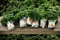<p>February is also a great time to sow seed for herbs inside that will be transplanted outside after the last frost. Take basil, which can germinate inside in about a week. Place pots with basil seeds in a sunny windowsill to ensure they get enought light. </p>