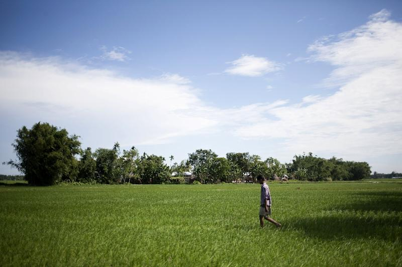 A villager walks through fields of Dalaha-Khagrabari in the Bangladeshi district of Panchagarh, on July 30, 2015 (AFP Photo/Suvra Kanti Das)