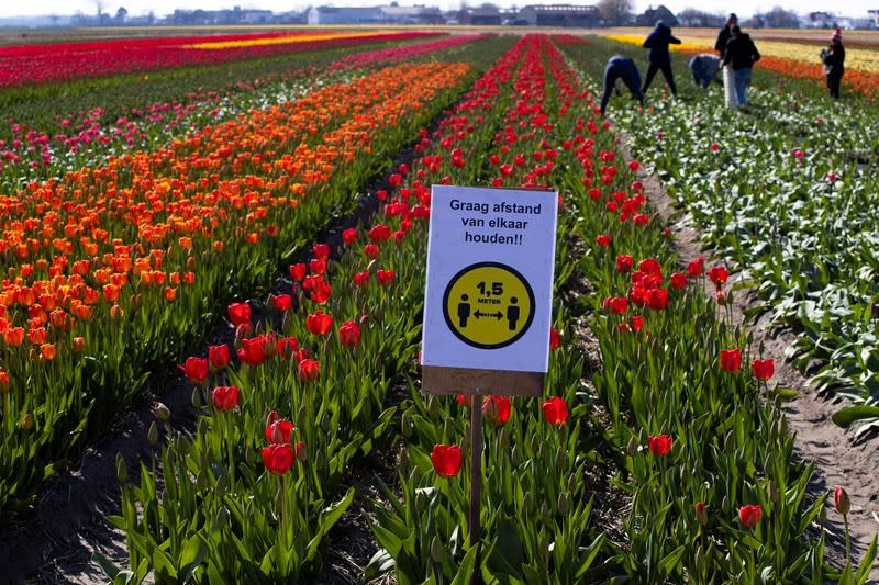'The value of a statistical life' and tiptoe through Dutch tulips; In The News for March 27