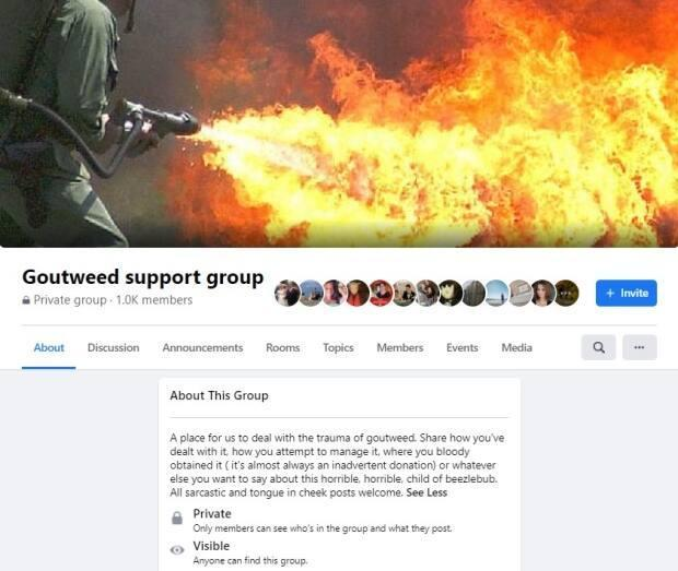 The Goutweed Support Group on Facebook bills itself as 'a place for us to deal with the trauma of goutweed.'