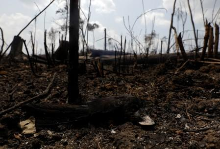 A dead bird is pictured at a burning tract of the Amazon jungle in Porto Velho