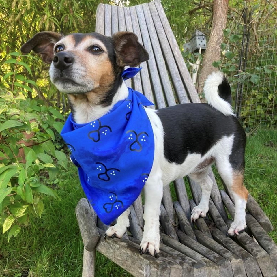 The Duchess' dog Beth wearing a bandana. Clarence House (Clarence House)