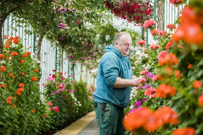 A gardener tends to flowers in the Royal Greenhouses of Laeken, on April 14, 2017, in Brussels, ahead of the site's opening to the public for three weeks