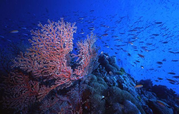 More beautiful coral that we saw on our trip. Source: Tourism Queensland