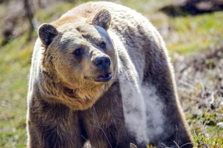 Nearly 20 bears now live in a rolling 16-hectare (40-acre) refuge near the capital Pristina