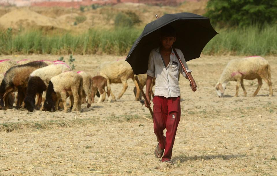 A young indian shepherd boy feeds his sheeps during a hot day in the outskirts of Allahabad on June 5, 2019 . Temperatures passed 50 degrees Celsius (122 Fahrenheit) in northern India as an unrelenting heatwave triggered warnings of water shortages and heatstroke.(Photo by Ritesh Shukla/NurPhoto via Getty Images)